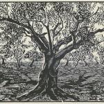 ΕΛΙΑ  Ξυλογραφία, 31 x 42 εκ., 1958