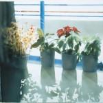 ΓΛΑΣΤΡΕΣ ΣΤΟΝ ΗΛΙΟ Μικτή τεχνική σε πλέξιγκλας, 68 x 100 εκ., 2003