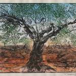 ΕΛΙΑ  Έγχρωμη ξυλογραφία, 31 x 42 εκ., 1960